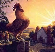 Il gallo che cantava per far nascere il sole