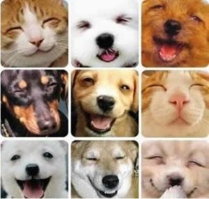 animali che ridono - Tempo Di Agire